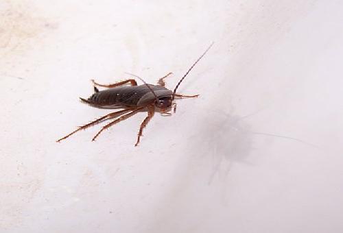 火星 ゴキブリ 発見