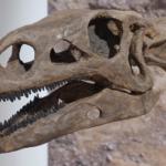 火星で恐竜の骨を発見!?
