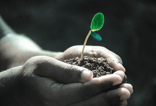 火星 植物 栽培