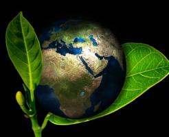 地球 植物 最初