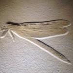 地球上の最初の昆虫は?いつ誕生したの?