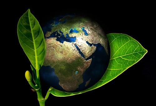 地球 最初 植物